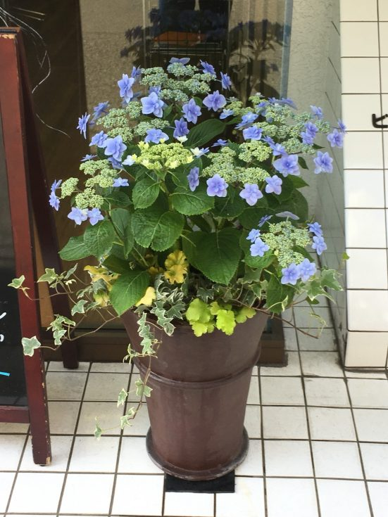 梅雨から初夏への寄せ植え