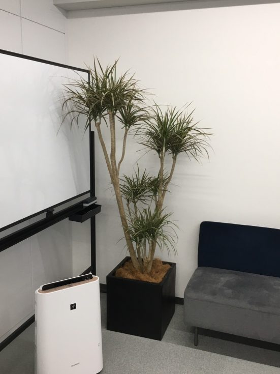樹形の美しいコンシネをポイントに設置